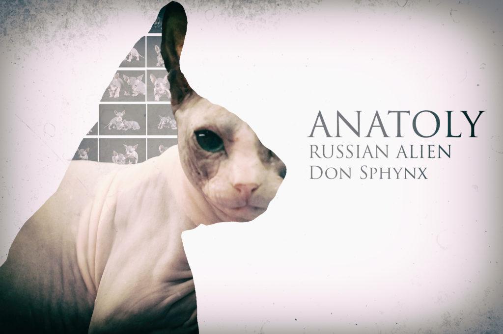 Anatoly Russian Alien - Don Sphynx
