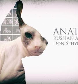 Anatoly Russian Alien
