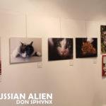 Russian Alien Don Sphynx a Vaprio d'Adda al Festival dei Gatti