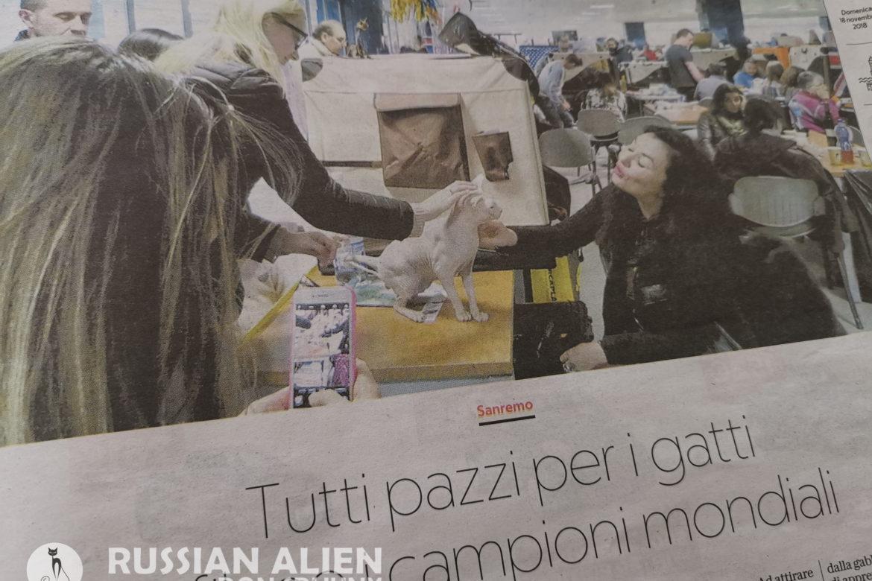 Mostra Felina Sanremo 2018 - Don Sphynx