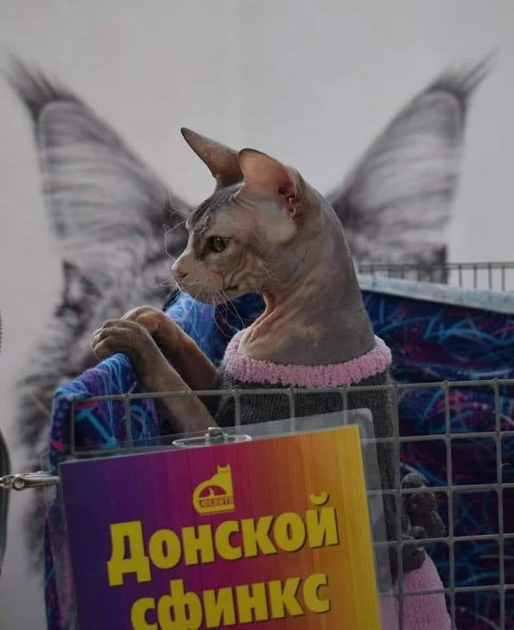 Minsk Cat Show 3 e 4 Apri...